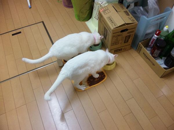 お食事♪.jpg