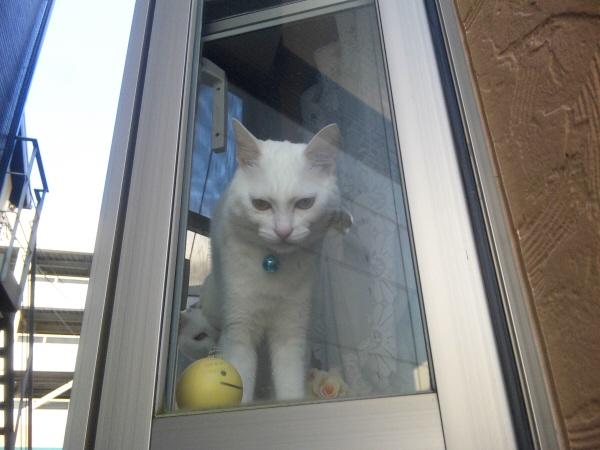 出窓から覗く猫たち.jpg